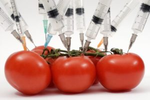 "Taylor Beberman: David Gould ""Genetically Modified Tomatoes"" March 14, 2013"