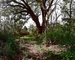 Steve McQueen, Lynching Tree, 2013
